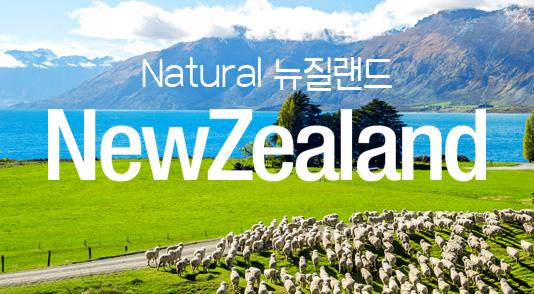 뉴질랜드 겨울 특별기